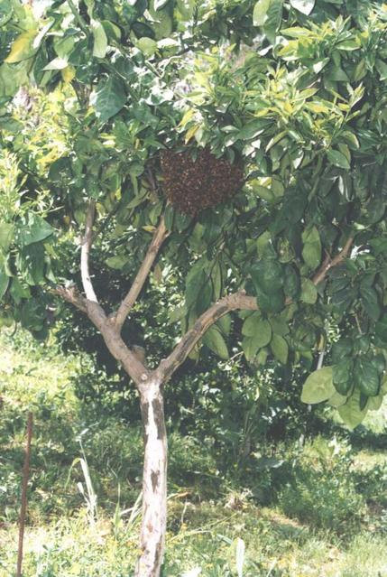 bees_02_1.jpg