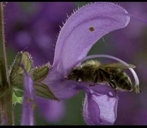 bees_polinate_02_1.jpg