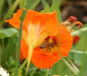 garden_01_05_04 039_1.jpg