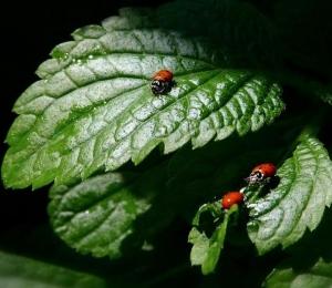 ladybug_1.jpg