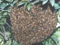 bees_01_1.jpg