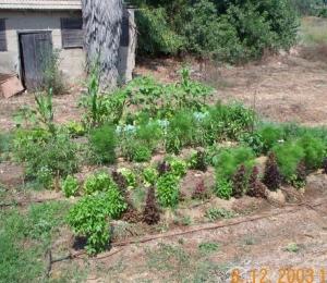 garden_001.jpg