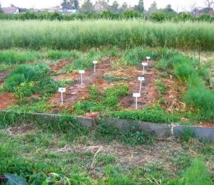 אדמה פורייה - חקלאות ברת קיימה