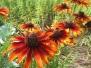 צמחי תבלין ומרפא