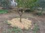 חיפוי וכיסוי צמחים ועצים
