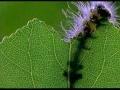 זחלים אוכלים עלה