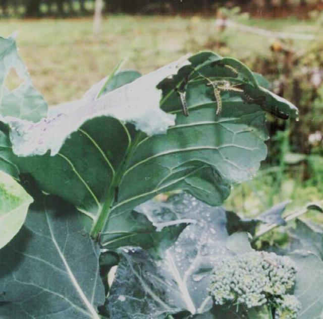 worms_eating_leaves_02.jpg