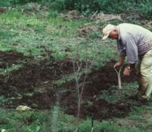 digging_0101.jpeg.jpg