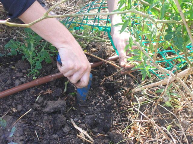 שתילה בערוגות הגינה