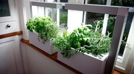 גידול ביתי - צמחי מרפא, תבלינים, ירקות